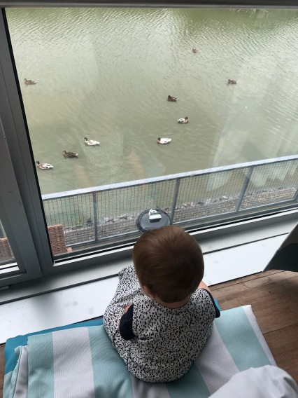 Eendjes kijken vanuit de slaapkamer